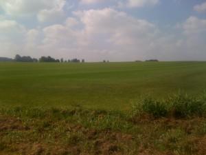 Monokultur bei Schrobenhausen: Ein Golfplatz? Nein, hier wird Rollrasen angebeut.